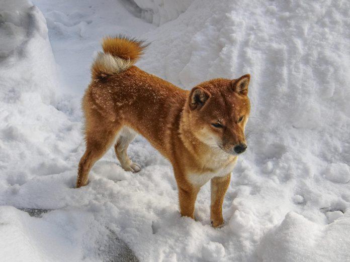 Dogecoin Dogethereum