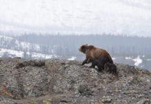 4 Faktoren für einen anhalten Krypto-Bärenmarkt