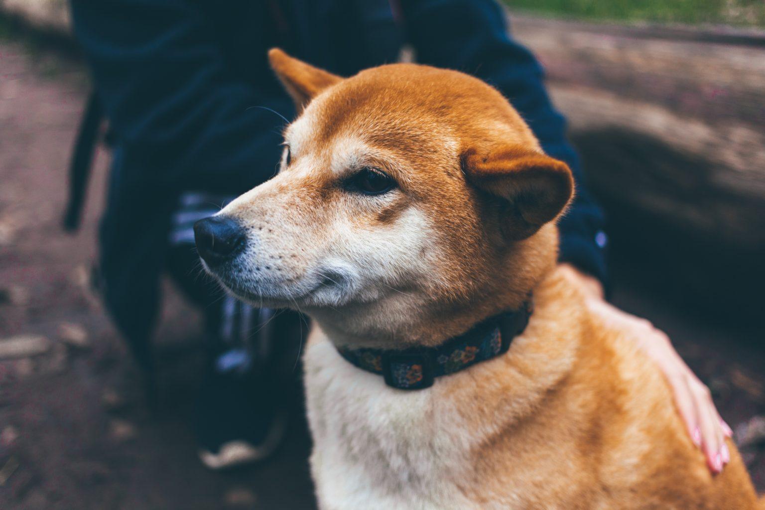 Dogecoin 'to the Moon' – Kryptowährung steigt um 30 Prozent