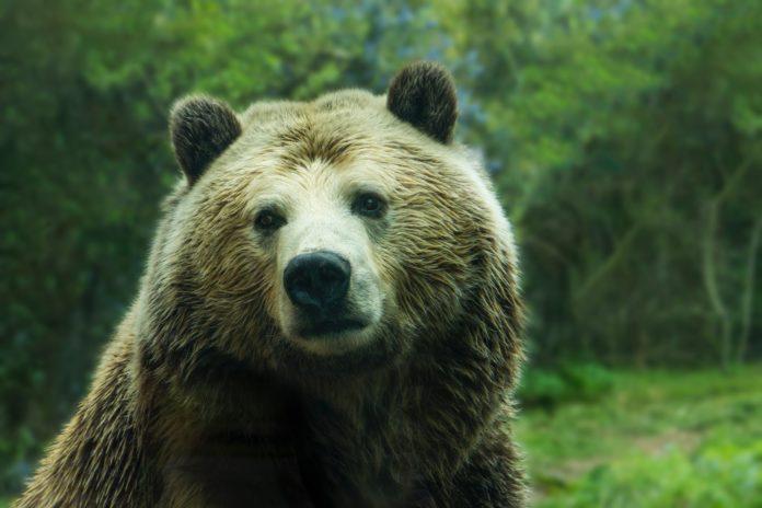 Wann hört der Bärenmarkt endlich auf? Ein neues Krypto-Tief 2018