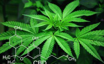 Marihuana-Aktien - Der nächste Bull-Run nach Kryptos - Coincierge