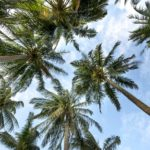 Blockchain kann Palmöl-Problem lösen - Coincierge
