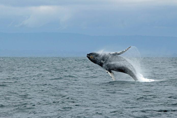 Bitcoin-Wale nicht allein für Volatilität verantwortlich