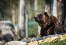 'I Fu%*ng Told You So' – John McAfee erklärt den Bärenmarkt für beendet